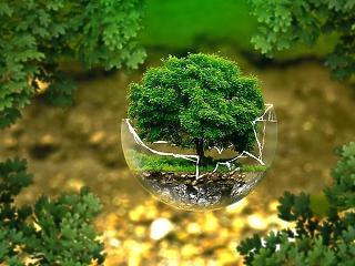 Karbonsemleges, sőt karbonnegatív! Ezt teszik az igazán környezettudatos multik