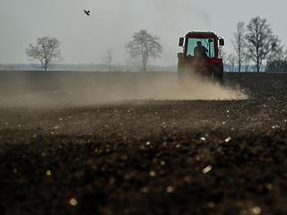 Akár 2 millió tonna gabonát is elvihetett a tavaszi aszály