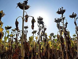 Ilyen hatással volt a magyar zöldségtermésre a klímaváltozás