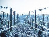 Áprilisi tél: lélegzetelállító, ahogy küzdenek ellene