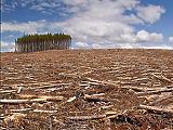 Norvégia sem ad több pénzt Brazíliának erdővédelemre