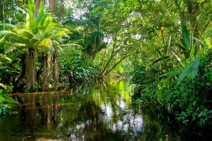 Az amazóniai esőerdő. (Forrás: Depositphotos)