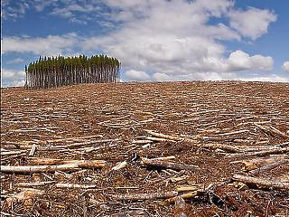 Majdnem egy luxemburgnyi erdőt vágtak ki júliusban az Amazonas vidékén