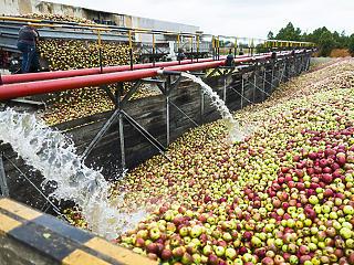 Az almatermelőknél továbbra is áll a bál