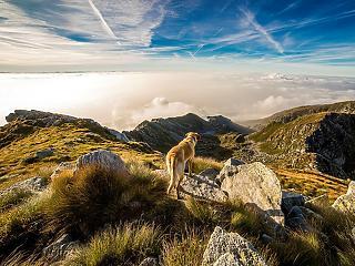 A kellemes nyaralás érdekében védd kutyádat a parazitáktól külföldön is!