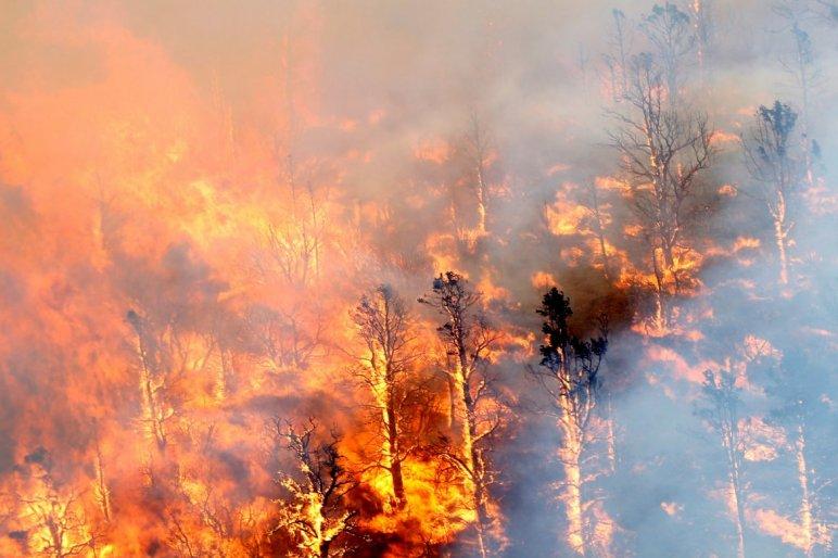 Csak Európában 1,2 millió hektárnyi erdő és föld égett le 2017-ben. A tüzek gyors elterjedésében nagy szerepet játszott a nyári hőhullám okozta szárazság.