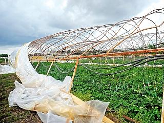 100 millióból segítik ki a gazdákat, akiknek széttépte a fóliasátrát a vihar
