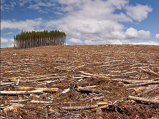Kicsit lassabban pusztultak el az erdők tavaly, de az ütem még mindig sokkoló