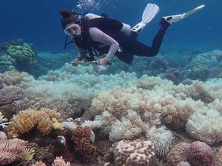 Döbbenetes jelenséget figyeltek meg a Nagy-korallzátonyon