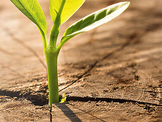 A bankok nélkül lassabban fogunk zöldülni