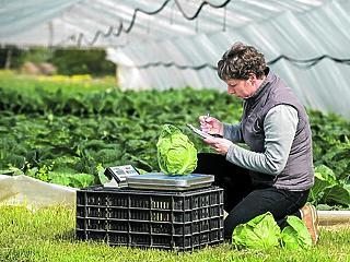 Drágult a zöldség, de olcsóbb lett a hús áprilisban