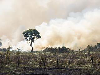 Gőzerővel pusztítják az esőerdőket Brazíliában