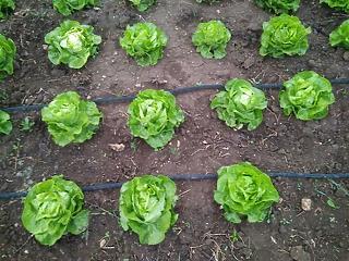 Több segítség a zöldség-és gyümölcstermesztőknek