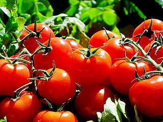 Lebukott a zöldségmaffia – 600 millió forintot csaltak el