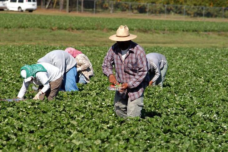 Eperszedők (a kép illusztráció). Fotó: depositphotos.com