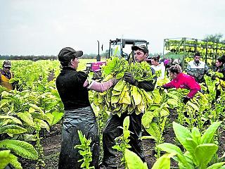 7 milliárdot tolt agrárcégébe Csányi Sándor