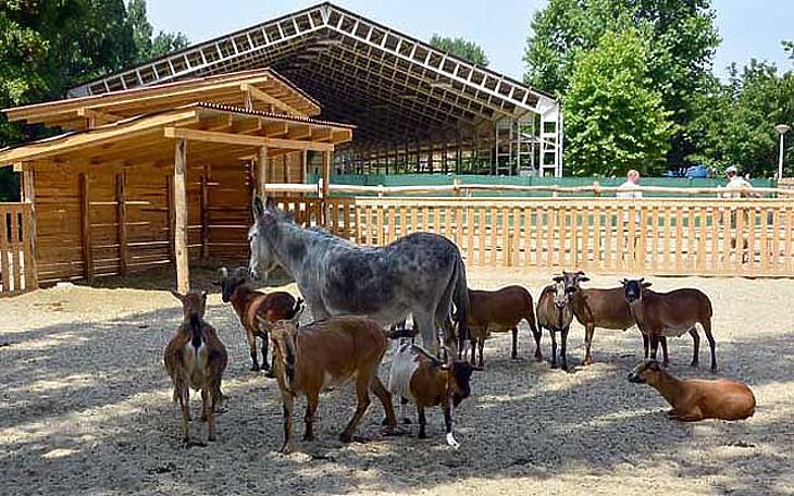 Állatkerti pillanat (forrás: Budapest Portál)