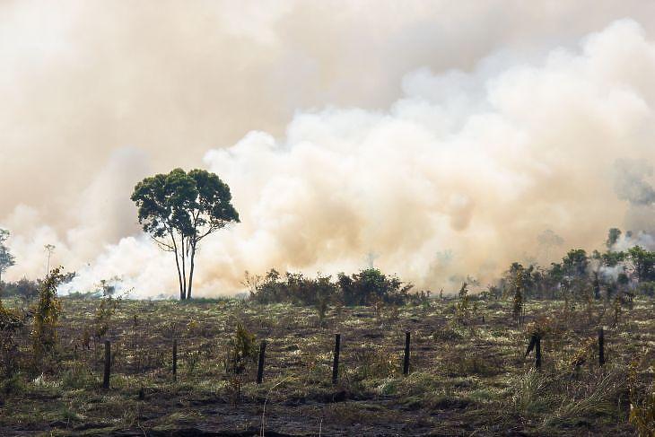 Lángoló Amazonas. (Forrás: Depositphotos)