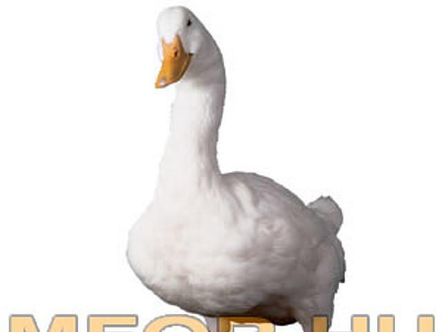Aflac kacsa