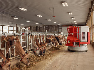 Így néz ki a farm, ahol robotok fejik a tehenet