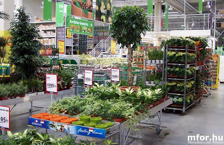 A kertészeti termékek árai közel 30 százalékkal drágultak. Fotó: MTI