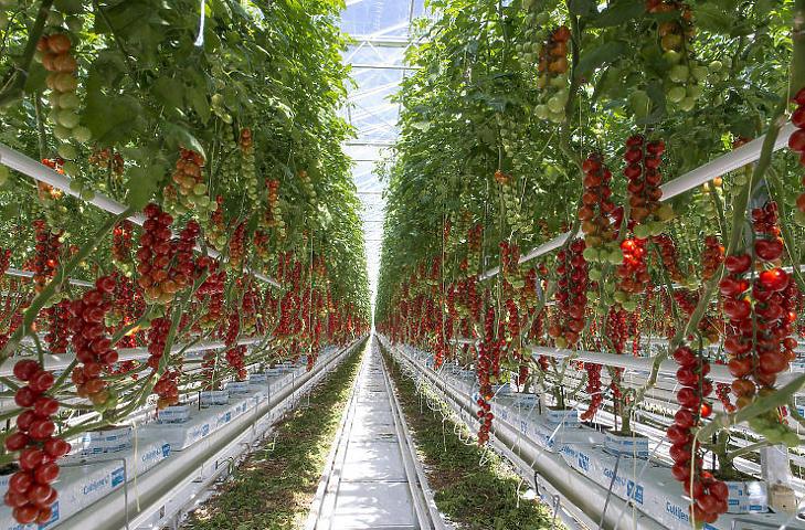 Komoly beruházást igényel egy modern üvegház (MTI Fotó/Krizsán Csaba)