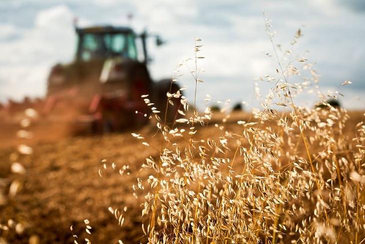 Az élelmiszer-termelés az egyik nagy, de nem a legjelentősebb károsanyag-kibocsátó szektor. Fotó: depositphotos