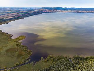 Világszerte súlyosbodik a mérgező algavirágzás a tavakban