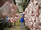 Drágább lesz a baromfihús jövőre