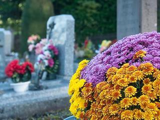 Halottak napja: nem drágul nagyot a krizantém