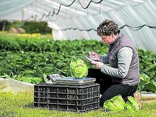 Még nem töri le az áfát a zöldségárakról a kormány