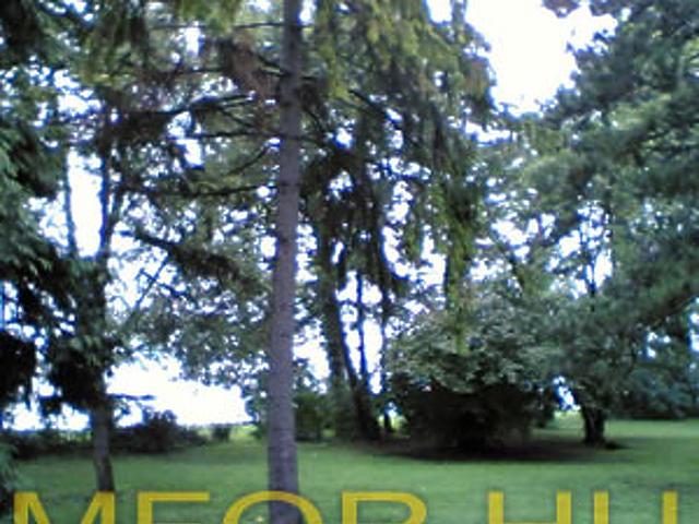 Az önkormányzat természetvédelmi területnek jelölte ki a Club Aligát.