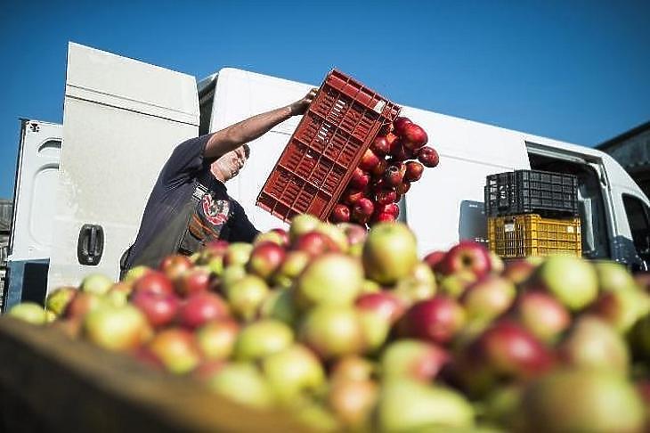 Aranyárban van az alma is (fotó: MTI)