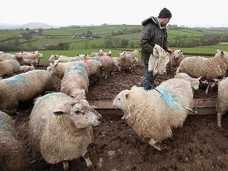 Öngyilkosságba hajszolhatja a brit farmereket a Brexit és a klímaváltozás