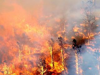 1,2 millió hektárnyi erdő és föld égett le tavaly Európában