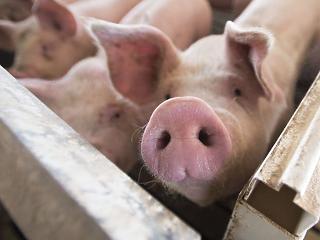 Elszálló húsárak – tehetetlen kormány?