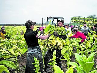 Továbbra sincs ember mezőgazdasági feladatokra