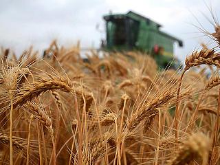 Felnyomta az élelmiszerárakat a korona-válság, nőtt is az agrárexportunk értéke tavaly