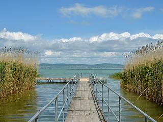Miniszteri biztost kapott a Balaton élővilága