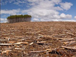 Egy év alatt egymillió focipályányi erdőt vágtak ki Brazíliában