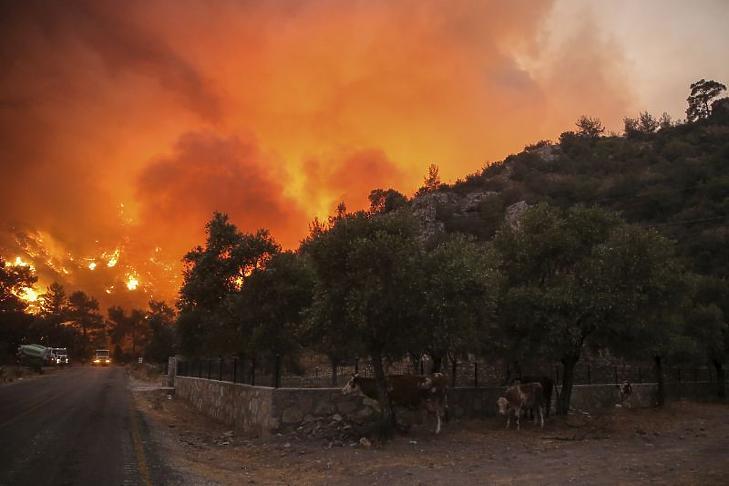 Lángol a növényzet a törökországi Cokertme faluban, az égei-tengeri Bodrum üdülőváros közelében 2021. augusztus 3-án, a térségben pusztító erdő- és bozóttüzek hetedik napján. (Fotó: MTI/AP/Emre Tazegul)
