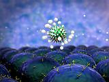 Itt vannak az új helyszínek, ahol T-sejtes immunválasz teszteket végeznek