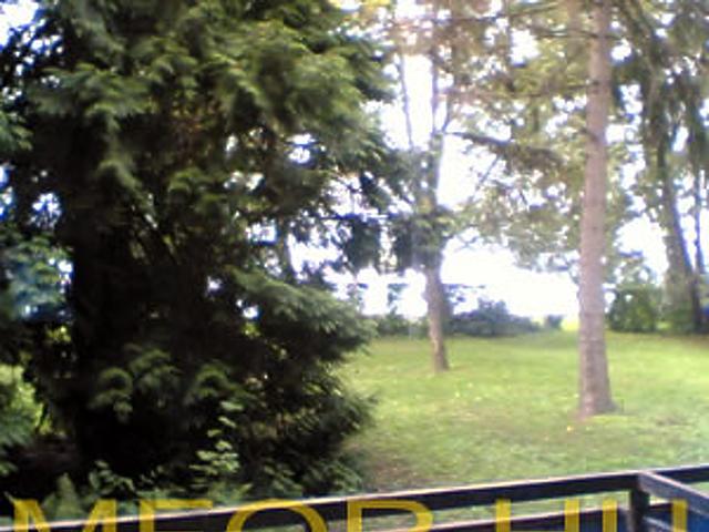 Kilátás az ősparkból a tóra