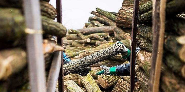 Vágják a fát hűvös halomba