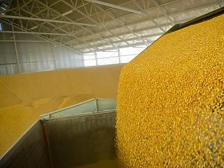 Kukoricában és csirkében átlag felett teljesítünk az EU-ban