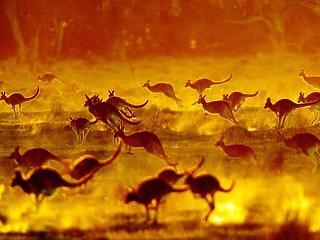 Élő Bolygó Jelentés: 1970 óta 68 százalékkal zsugorodott a vadon élő állatfajok populációja