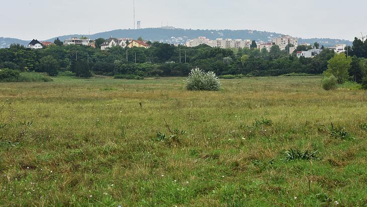 A háttérben a város (Fotó: Bánkuti András)
