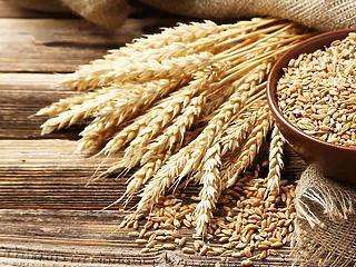 Meddig nőnek még a gabonaárak?