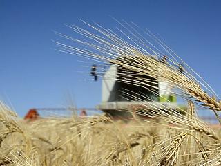 Tovább vágtat a gabona ára