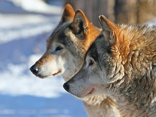Zöld listát vezetett be a Természetvédelmi Világszövetség, melyen azt jelzi, hogyan lehet megőrizni a veszélyeztetett fajokat